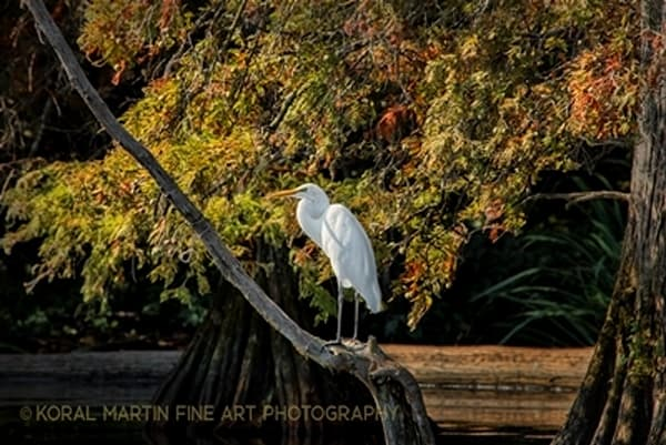 Egret Photograph 0632  | Tennessee Photography | Koral Martin Fine Art Photography