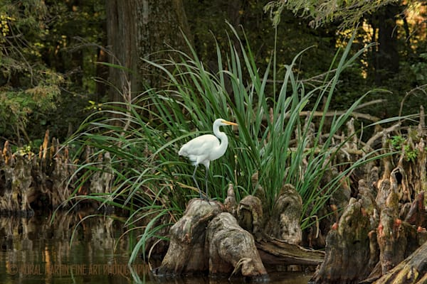 Egret Photograph 0232 | Tennessee Photography | Koral Martin Fine Art Photography