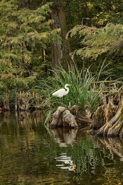 Egret Photograph 0244 | Tennessee Photography | Koral Martin Fine Art Photography