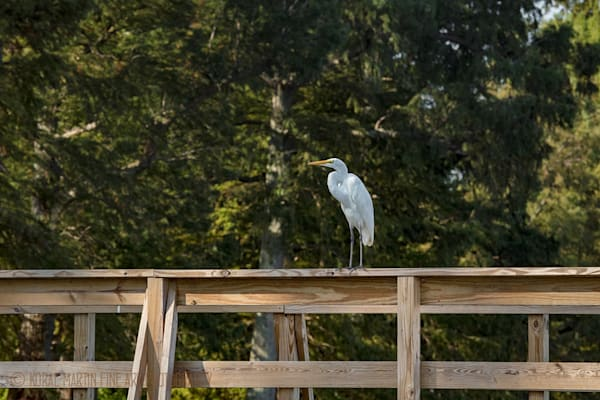 Egret Dock Photograph 0105 | Tennessee Photography | Koral Martin Fine Art Photography