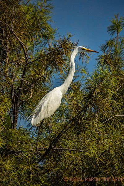 Egret Photograph 0943 | Tennessee Photography | Koral Martin Fine Art Photography