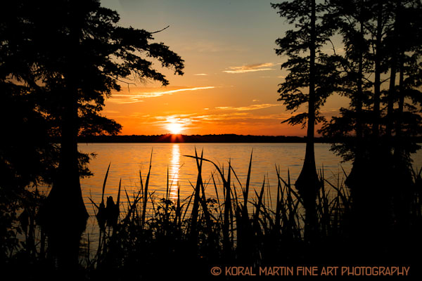 Sunrise Reelfoot Lake Photograph 1416 LF  | Tennessee Photography | Koral Martin Fine Art Photography