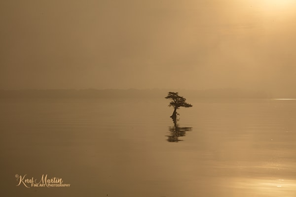 Sunrise Reelfoot Lake mellow Photograph 0454 | Tennessee Photography | Koral Martin Fine Art Photography