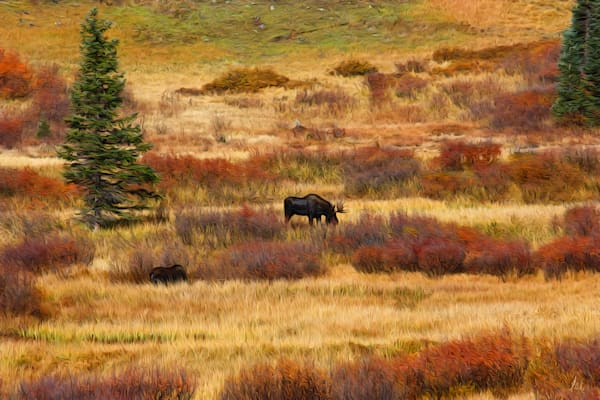 Moose print of photograph for sale as digital art by Maureen Wilks