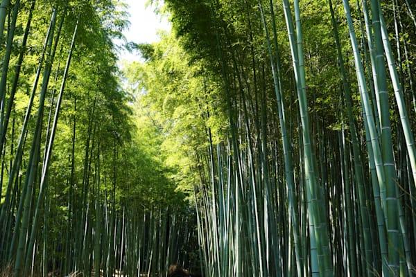 Japan Bamboo Art | ARTHOUSEarts