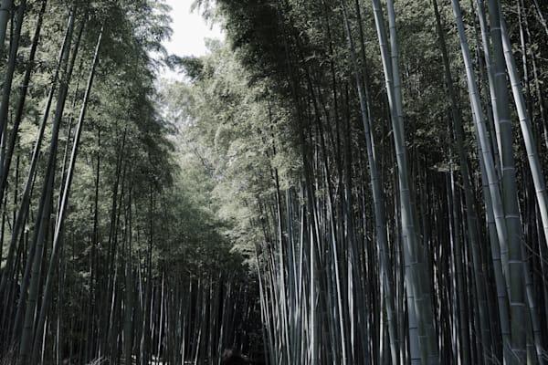 Japan Bamboo Mystery Art | ARTHOUSEarts