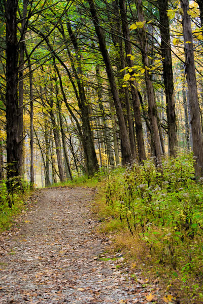 Pathway Through The Woods   Dsc1645bbbbb Art | No Blink Pictures, LLC