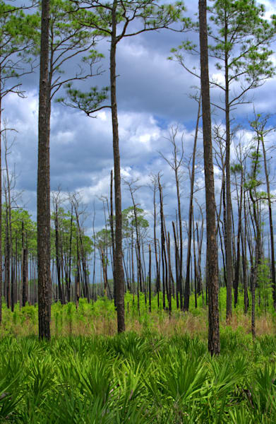 Swamp Regrowth Art | No Blink Pictures, LLC
