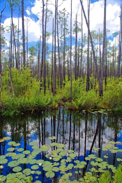 Swamp Beauty Art | No Blink Pictures, LLC