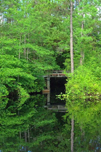Swamp Tunnel Art | No Blink Pictures, LLC