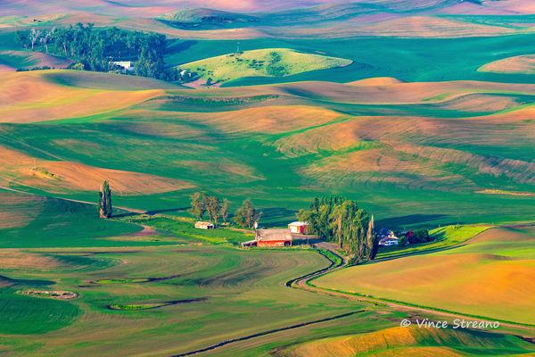 Palouse farm scene in eastern Washington