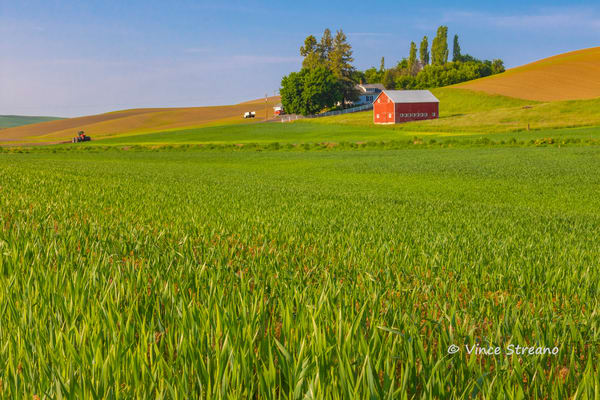 Farm scene on the Washington Palouse