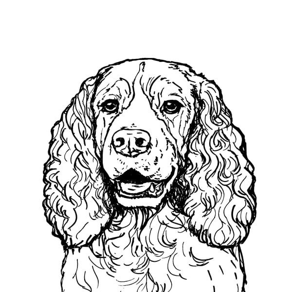 Cocker Spaniel Dog Drawing Line Art