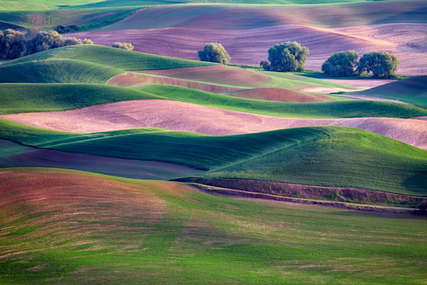 Rolling Hills of the Palouse by Rick Berk