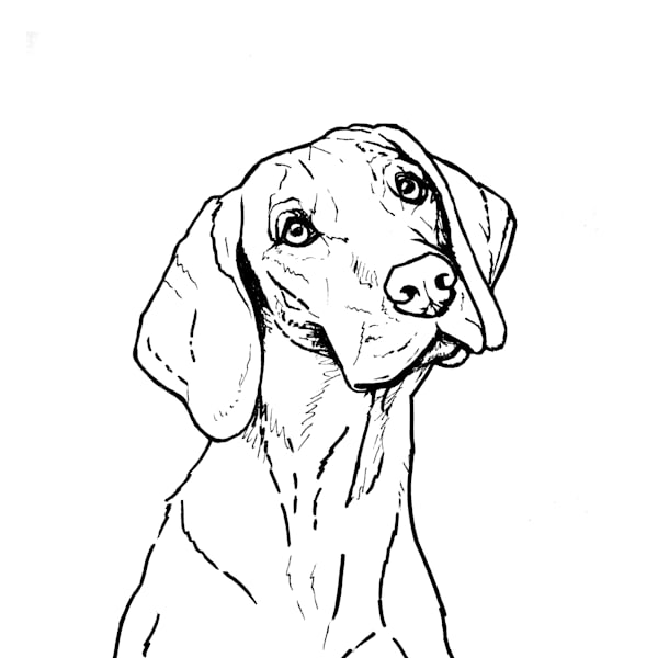 Sketch Drawing of a Vizsla Dog in Black and White
