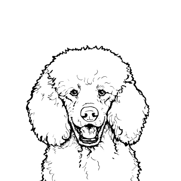 Print of a Poodle Dog drawing in black and white, Art by Zann