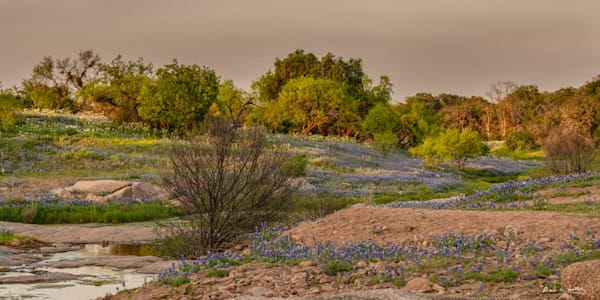 TX, hill-country, art, wildflower, bluebonnet, granite, spring, water