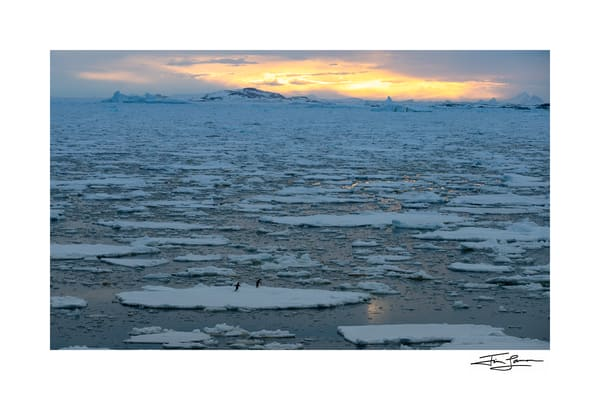 Photo of penguins exploring Antarctica.