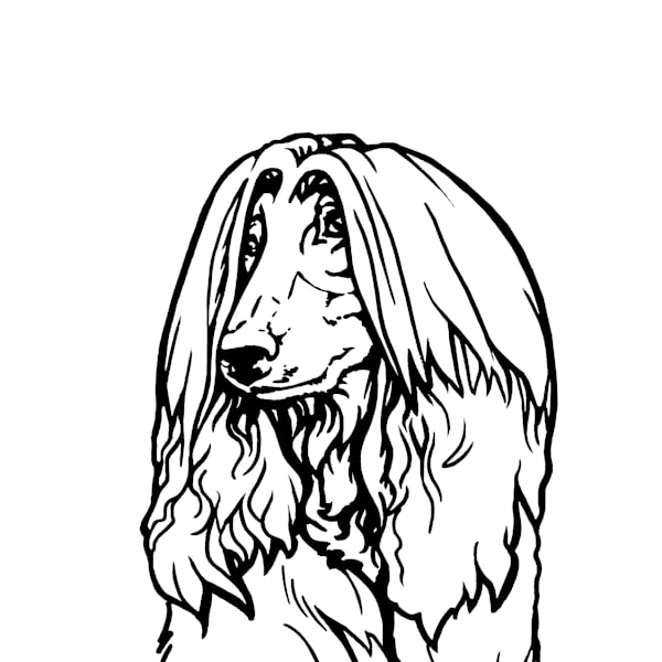 Black And White Line Drawings Dog Art By Zann