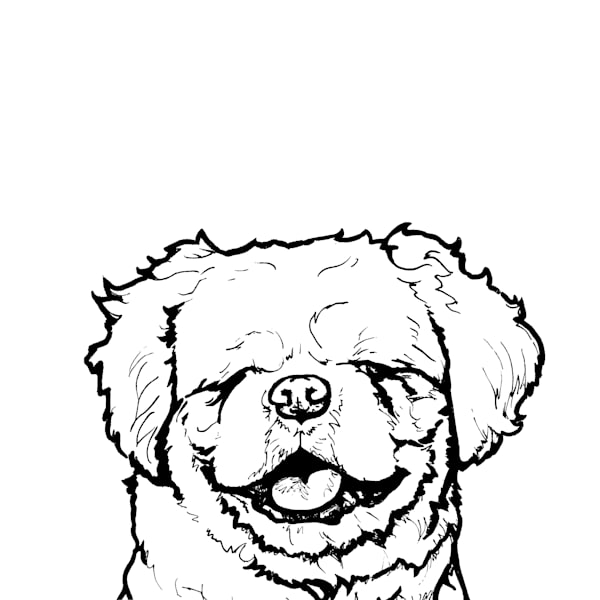 Shih Tzu Line Drawing