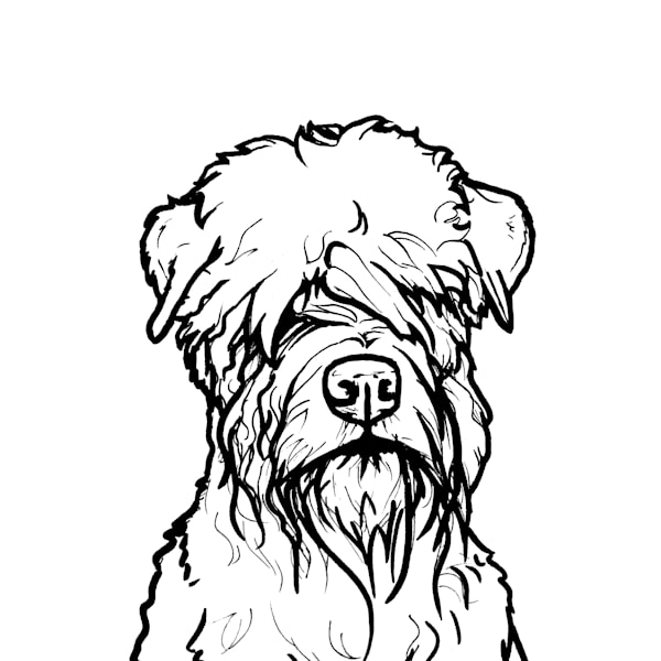 Wheaten Terrier Line Drawing Art | Van Isle Dog Art