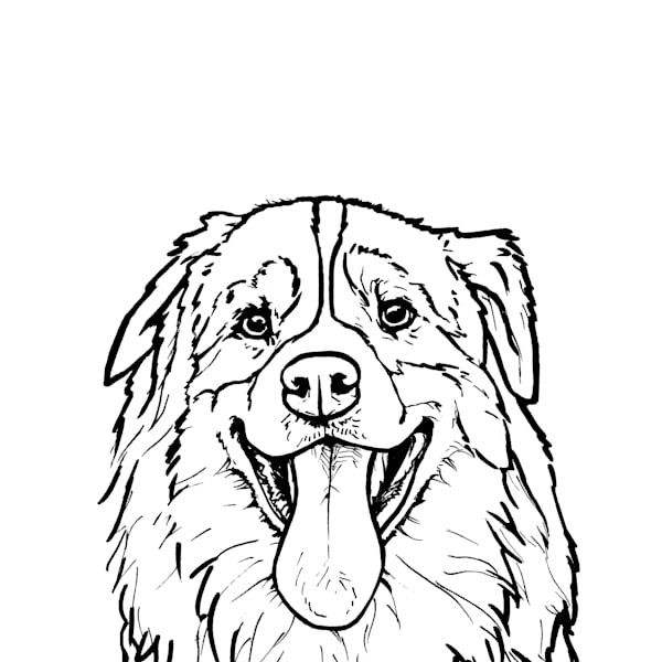 Australian Shepherd Line Drawing