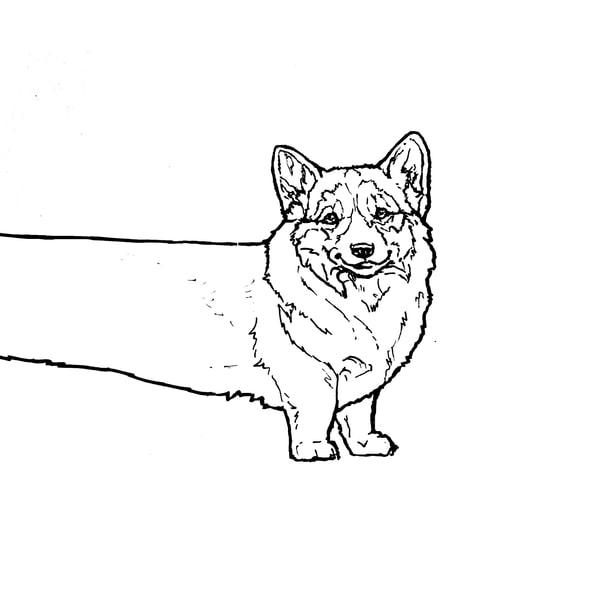 Corgi Line Drawing
