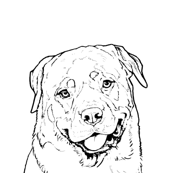 Rottweiler Line Drawing