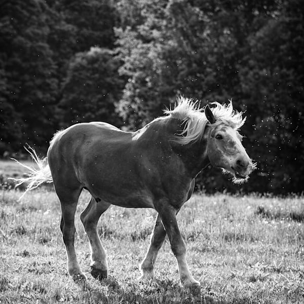 Horse Moves III