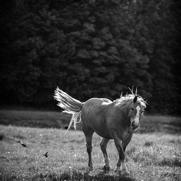 Horse Moves Ii Photography Art | Nathan Larson Photography