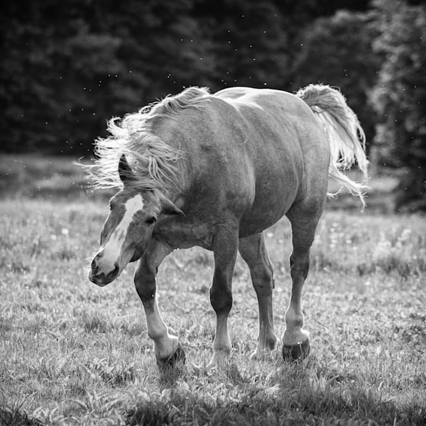 Horse Moves IV