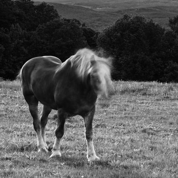 Horse Moves V Photography Art | Nathan Larson Photography, LLC