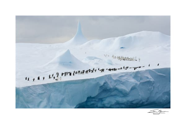 Photo of Adelie Penguins on an iceberg with a pinnacle formation.
