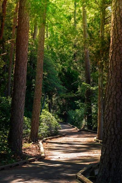 Boardwalk Pathway Belle Isle State Park