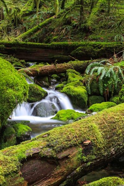 A Better Small Fall Mossy Tree Photography Art | offleashphotography