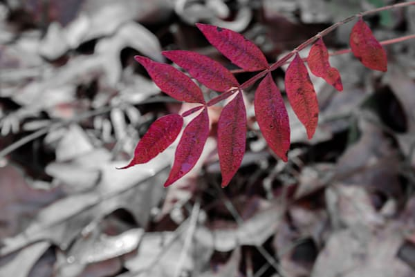Red Photography Art | Colin Hocking Photography