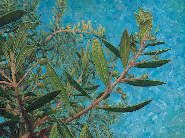 Olives à Claviers Étude