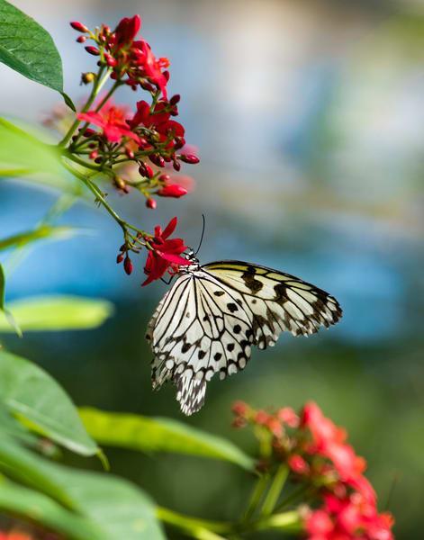 'Graceful Wings' Photograph by Nancy Miller for sale as Fine Art