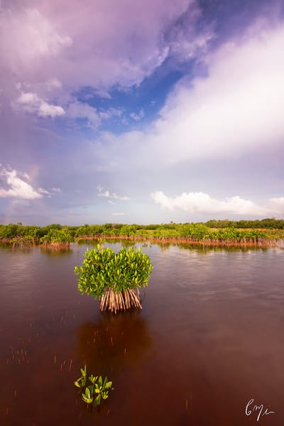 Constance Mier fine art nature photography - images of florida everglades