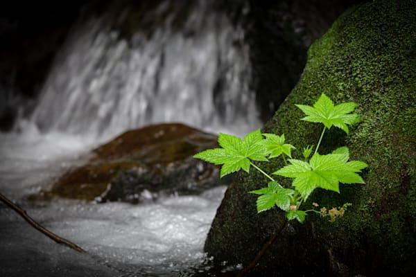 Pnw Merriman Falls 4 Photography Art | John Martell Photography