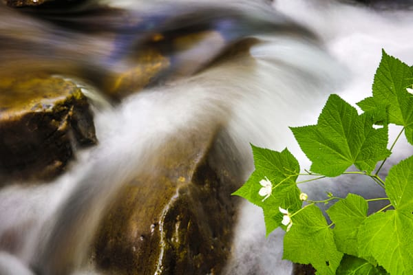 Pnw Rocky Brook Falls 5 Photography Art | John Martell Photography