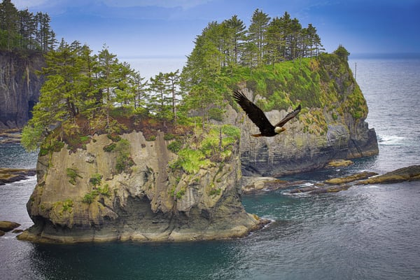 Pnw Cape Flattery Flyby Photography Art | John Martell Photography
