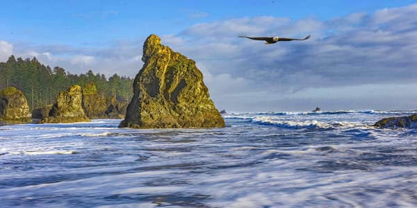 Pnw Ruby Beach Eagle 2 Photography Art | John Martell Photography