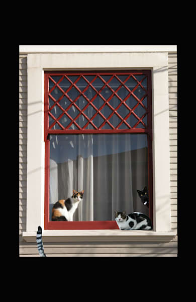 Cats of Alameda for Sale as Fine Art