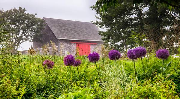 Kieth Farm Flowers And Fog