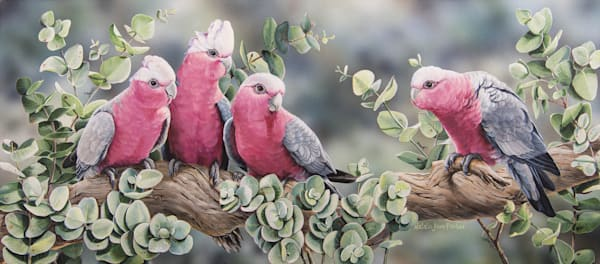 Silver Gum Galahs -  Galahs (rose-breasted cockatoo) | Acrylic on Clayboard Painting