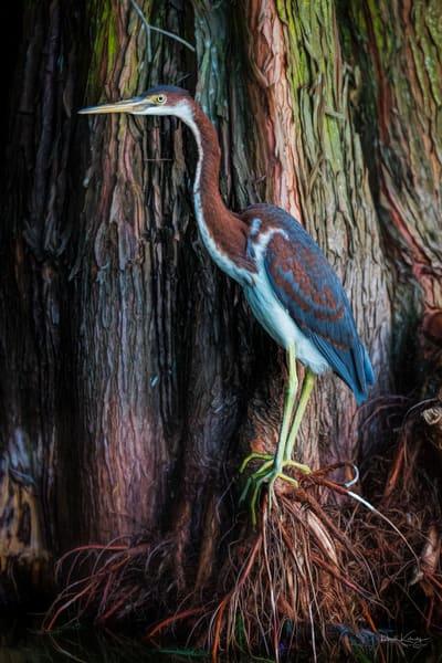 Birds and Raptor Photographs