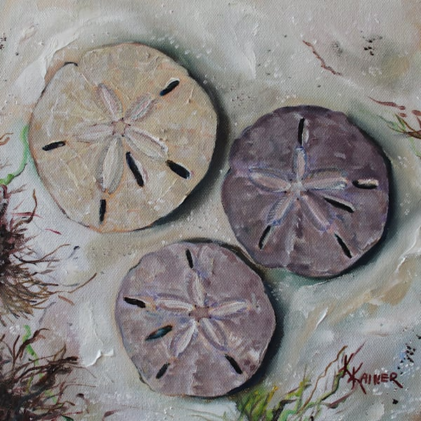 Sand Dollars Original Oil Painting by Coastal Artist Kristine Kainer