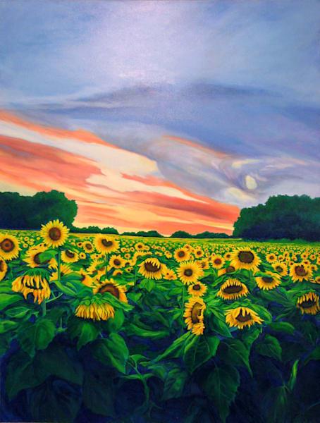 Grinter Farm Sunflowers, Sunset