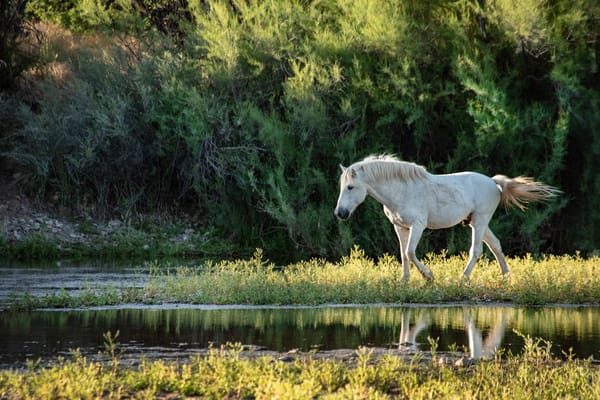'The Majestic Gypsy' Photograph by Nancy Miller for sale as Fine Art